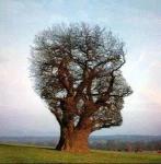 l'arbre de laconnaissance