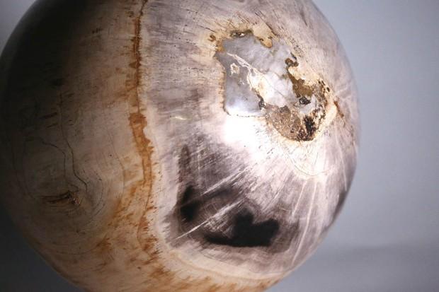 Boule de Bois fossilisés,, photo Serge Briez®