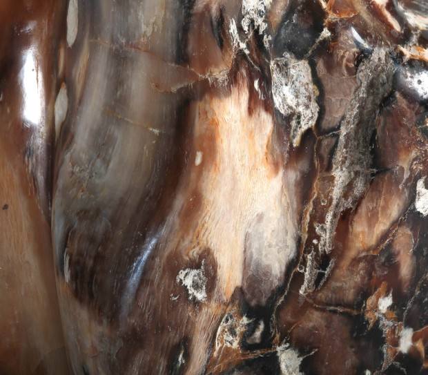 détail Bois fossilisés,, photo Serge Briez®