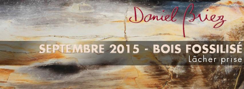 LA PIERRE DU MOIS DE SEPTEMBRE 2015 - LE BOIS FOSSILISÉ