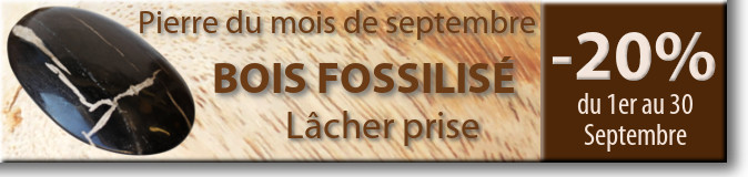 Retrouvez la pierre du mois de septembre : le Bois Fossilisé sur www.cristaux-sante.com